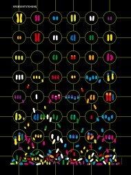 2007 Chaos Chromosomen P.Duesberg spw 10.07 1 - Prostata ...