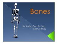 Review Bone - Sinoe medical homepage.