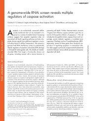 A genome-wide RNAi screen reveals multiple regulators of caspase ...