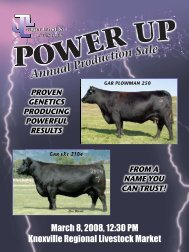 "JLL 2008 ""Power up"" Registered Yearling Bulls - Angus Journal"