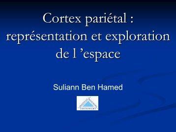 Cortex pariétal et exploration spatiale
