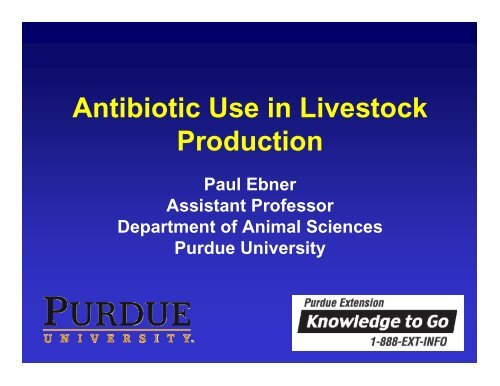 Antibiotic Use in Livestock Production