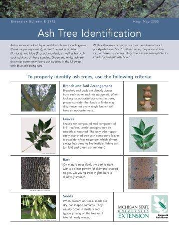 Ash Tree Identification Bulletin E-2942 - Emerald Ash Borer