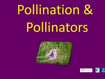 Pollination and Pollinators - Green Schools Ireland