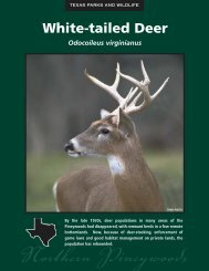 White-tailed Deer - The State of Water