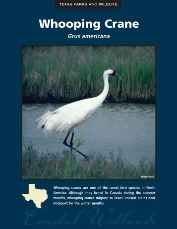 Whooping Crane - The State of Water