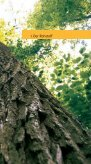 Forst - HOLZ SCHMID Holzwerk und Industrieverpackungen - Seite 5