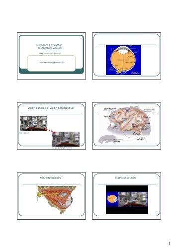 Vision centrale et vision périphérique Motricité oculaire ... - IFRATH