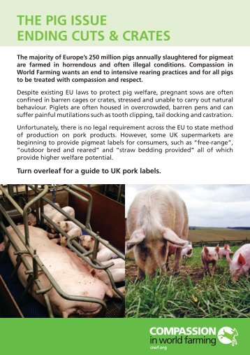 the pig issue ending cuts & crates - Compassion in World Farming