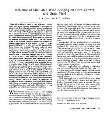 Influence of Simulated Wind Lodging on Corn Growth and Grain Yield