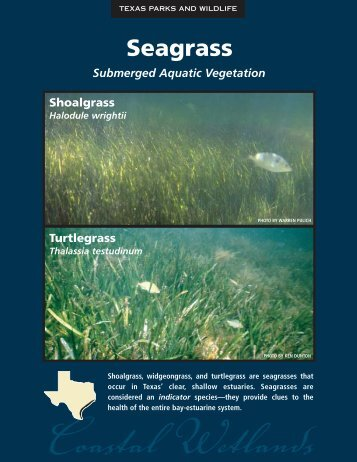 Seagrass - The State of Water
