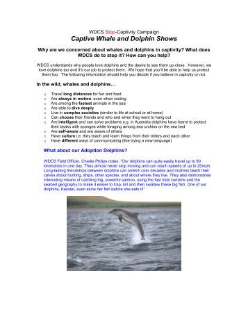 Kids introduction to captivity - Whale and Dolphin Conservation ...