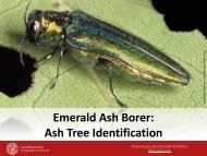 Emerald Ash Borer: Ash Tree Identification
