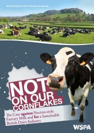 CORNFLAKES - Not in my Cuppa