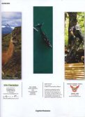 enlace - Instituto de Conservación de Ballenas - Page 2
