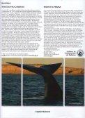 enlace - Instituto de Conservación de Ballenas - Page 5
