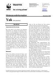Yak - WWF Arten AZ - WWF Deutschland
