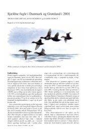 Sjældne fugle i Danmark og Grønland i 2001 - Zoologisk Museum