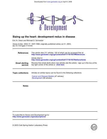 Sizing up the heart: development redux in disease - UT Southwestern