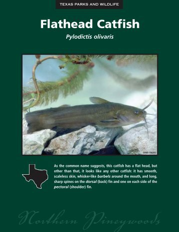 Flathead Catfish - The State of Water