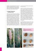 BESSER ERNTEN MIT RESISTENTEN SORTEN - IG Pflanzenzucht - Seite 6