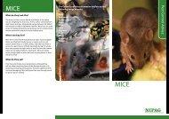 MICE MICE - Carrickfergus Borough Council