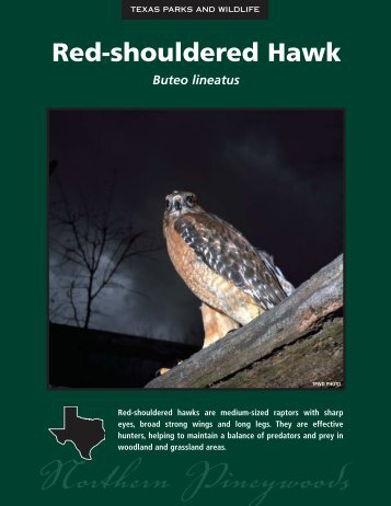 Red-shouldered Hawk - The State of Water
