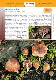 Psathyrella pennata - Tintling