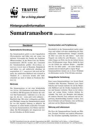 Sumatranashorn