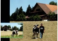 Cows-of-the-world21.jpg