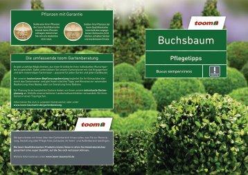 Buchsbaum