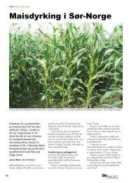 Maisdyrking i Sør-Norge - Fagbladet Økologisk Landbruk