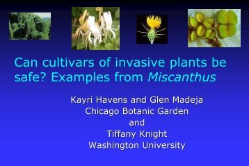 Evaluation of Miscanthus Cultivars for Fecundity and Potential ...