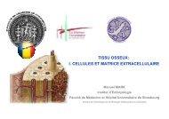 TISSU OSSEUX: I. CELLULES ET MATRICE EXTRACELLULAIRE
