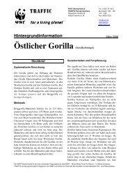 Östlicher Gorilla (Gorilla beringei)