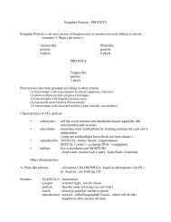 Kingdom Protista - PROTISTS - contains 11 Phyla ( divisions ...