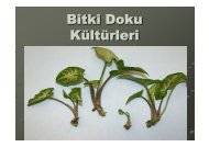 Bitki Doku Kültürleri