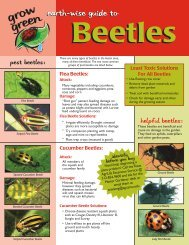 Beetle - Aggie Horticulture