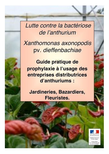 Lutte contre la bactériose de l'anthurium Xanthomonas axonopodis ...