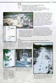Spor og tegn - et hefte til hjelp i bestemmelse av store rovdyr - NINA - Page 6