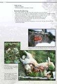 Spor og tegn - et hefte til hjelp i bestemmelse av store rovdyr - NINA - Page 7