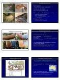 Insekten als Ursache allergischer Reaktionen - Seite 4