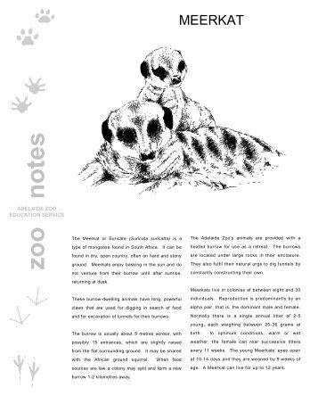 Meerkat - Zoos South Australia