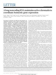 A long noncoding RNA maintains active chromatin to coordinate ...