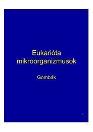 Az eukarióták fő sejtösszetevői