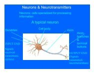 Neurons & Neurotransmitters A typical neuron