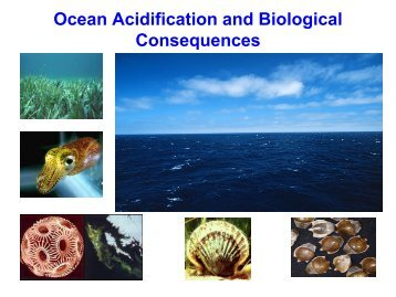 Ocean acidification  ongoing decrease in the pH of the Earth's ...