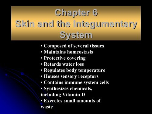 Chapter 6 Skin And The Integumentary System Arkansas State