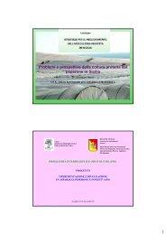 1 Problemi e prospettive della coltura protetta del peperone in Sicilia