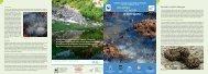 Gli anfibi e i rettili in Valtrigona - Valsugana